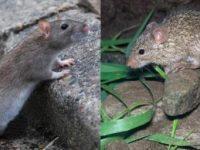 Орган одного животного вырастили втеле другого