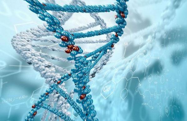 ДНК — цепь длиной двадцать миллиардов км