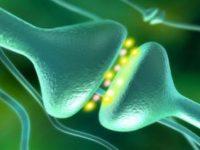 Искусственные синапсы - путь к биокомпьютерам
