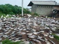 Дождь из мертвой рыбы