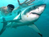 Олимпийский чемпион проиграл белой акуле