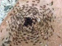 Муравьеворот- тайна муравьиных кругов