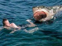 Флорида: акулы нападают на людей