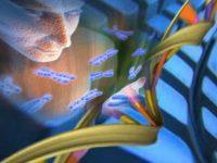 Чем обернётся бездумное редактирование ДНК