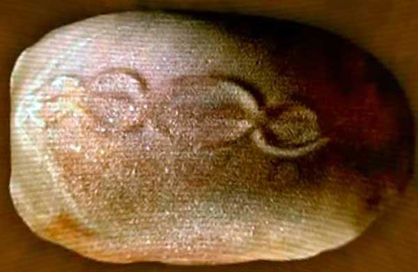 ДНК на «Космическом Яйце».